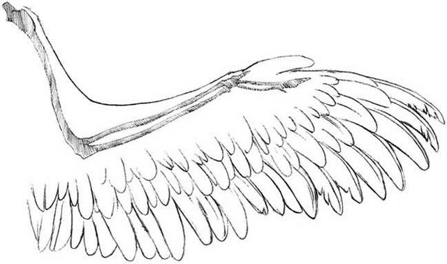 Anime Feather Drawing Draw The Next Feather Layer
