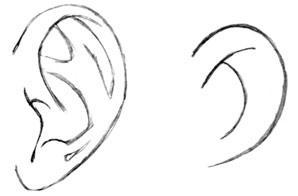 how to draw ears step 1  Ear Drawing Step By Step