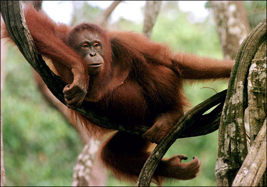 endangered animals in malaysia essay