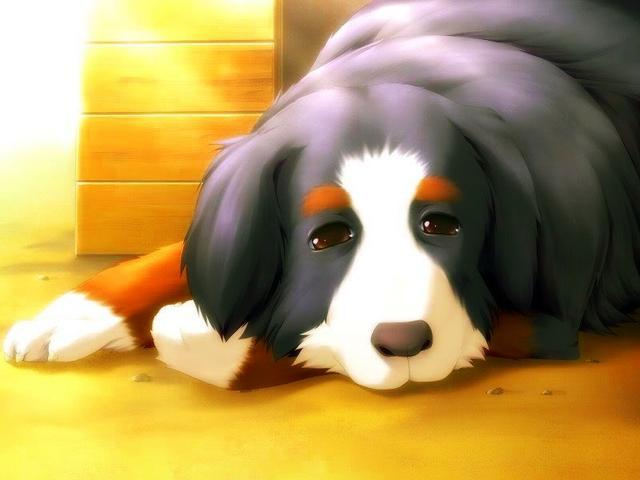 Crunchyroll Dog Adoption