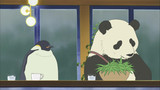 Mr. Handa's Discussion! / Panda Mama's Daily Life image