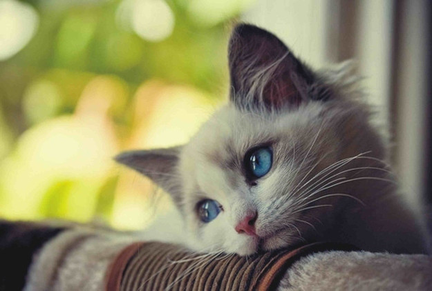 Image result for animals crying