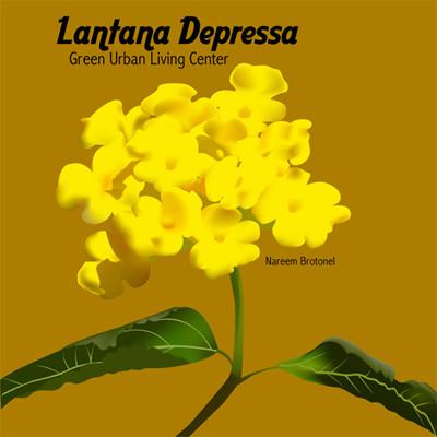Lantana_Depressa