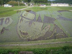 naruto rice fields