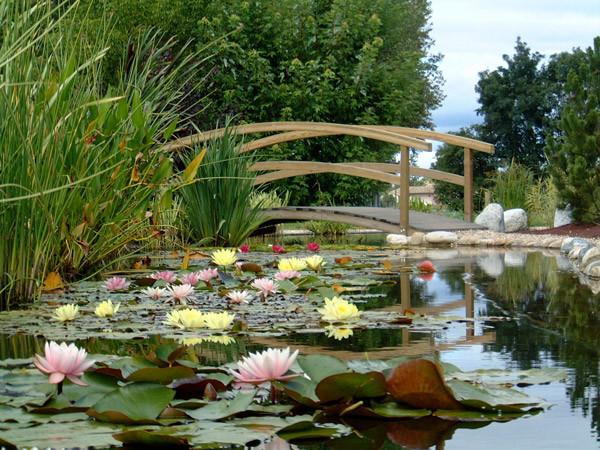 Crunchyroll Planning Des Evenements Special Jardins Japonais En