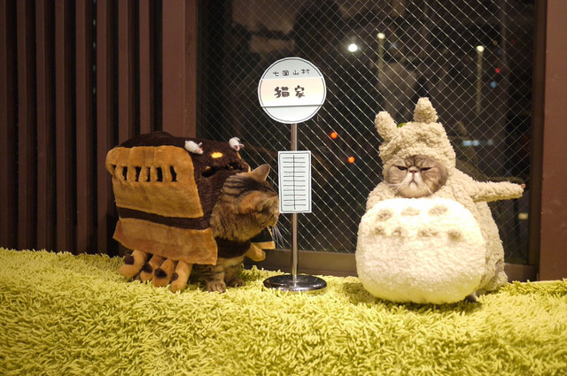 Check out a few of these costumes from My Neighbor Totoro and Spirited Away & Crunchyroll - Cat Cafe Dresses up Its Employees in Adorable Costumes