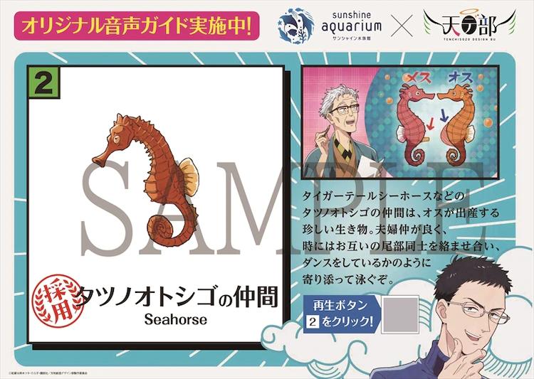 Seahorse information card