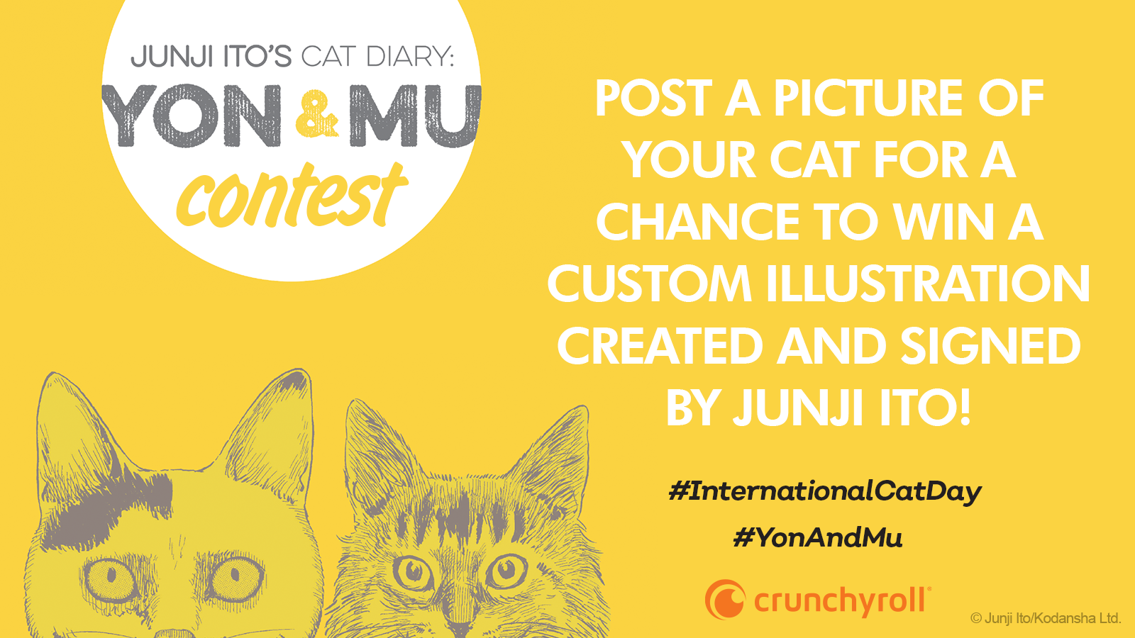 International Cat Day Contest
