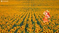Sunflower Hime