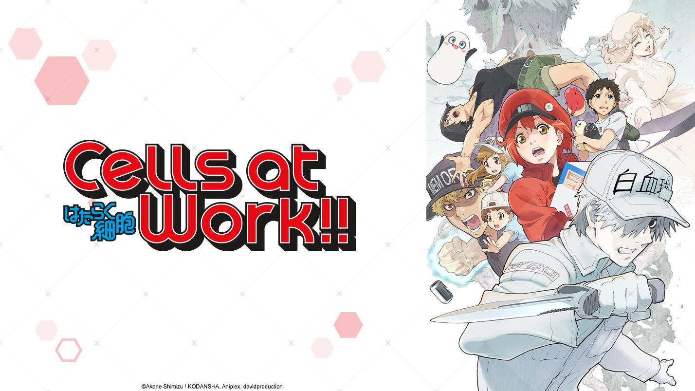 ¡Células en el trabajo!  Temporada 2