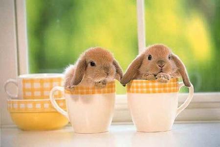 crunchyroll cute bunny fanclub group info
