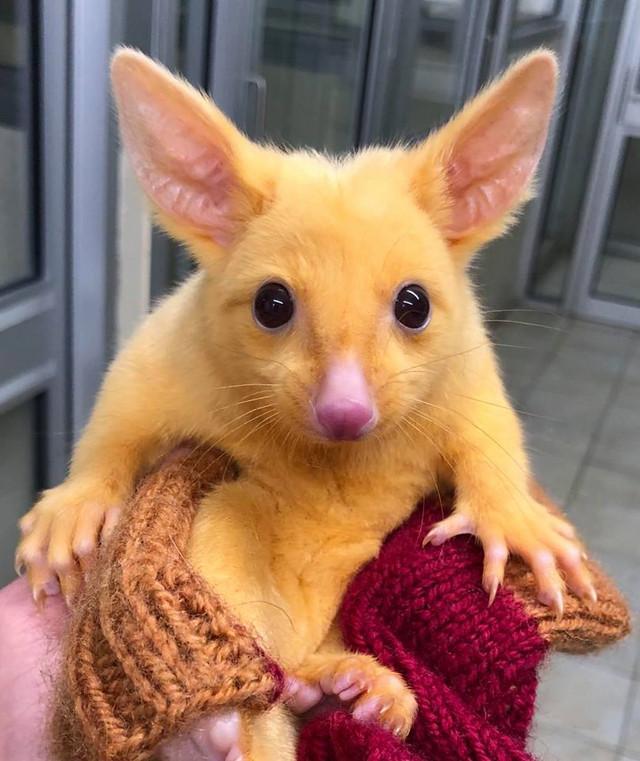 Crunchyroll - Australian Animal Hospital Goes Viral with Arrival of