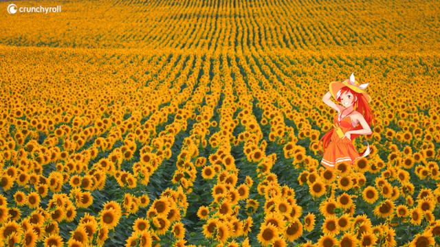 هيمي في حقل أزهار دوار الشمس