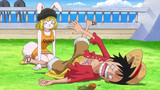 One Piece: Zou (751-782) Episodio 778