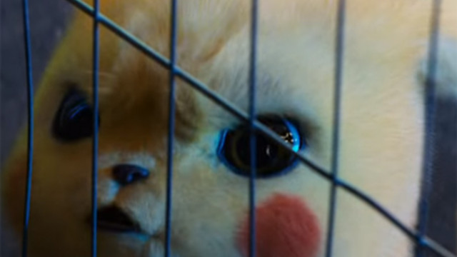 Crunchyroll 10 Things You Missed In The New Detective Pikachu Trailer