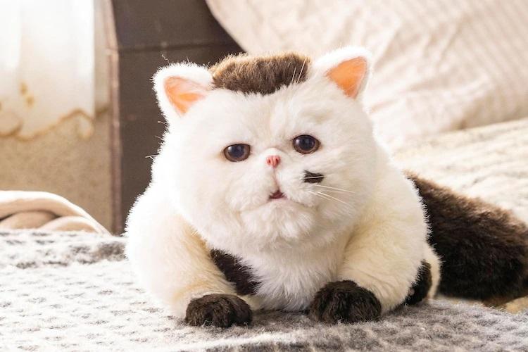 Una imagen promocional con la marioneta que retrata a Fukumaru, el exótico y hogareño gato de pelo corto en el próximo drama televisivo de acción en vivo A Man and His Cat.